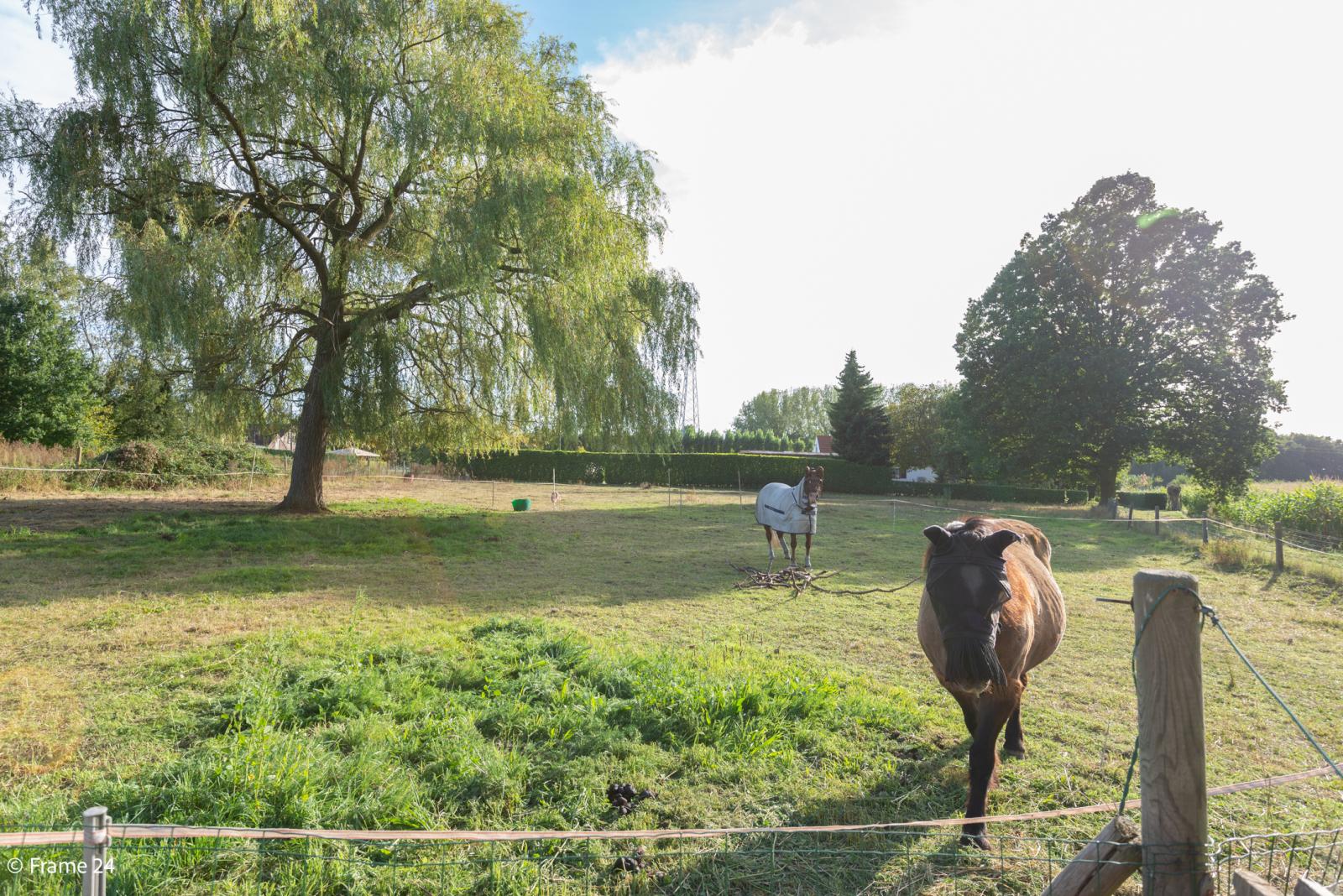 Mooie woning met grote weide (2.700 m²) te Wommelgem. Ideaal voor het houden van paarden of schapen! afbeelding 2