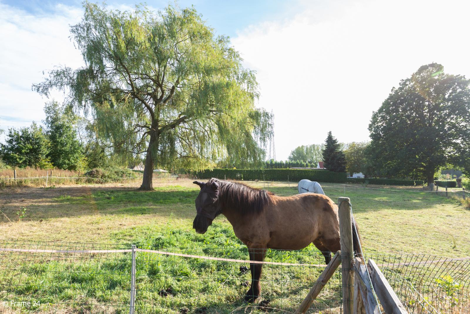 Mooie woning met grote weide (2.700 m²) te Wommelgem. Ideaal voor het houden van paarden of schapen! afbeelding 32