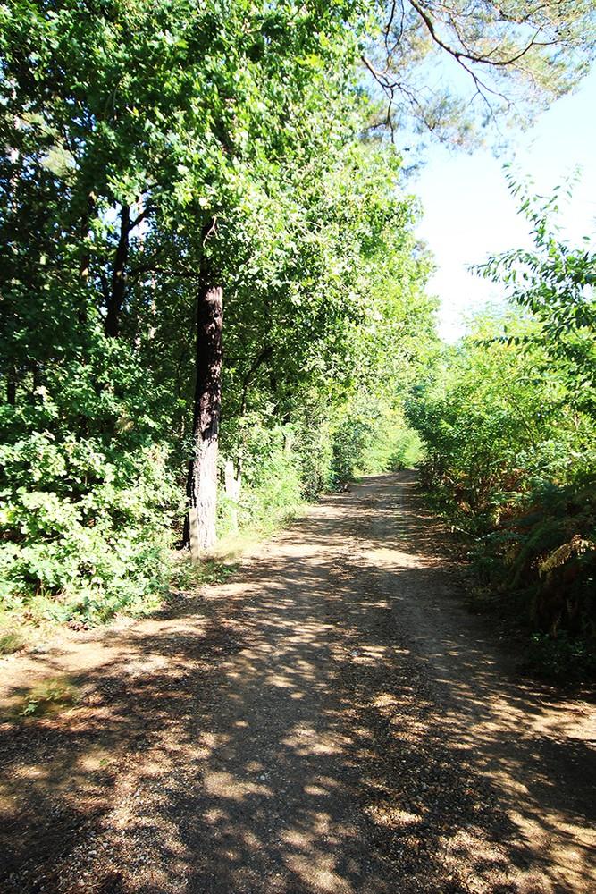 Zuid-georiënteerd perceel recreatiegrond van 1.450 m² te Herentals! afbeelding 6